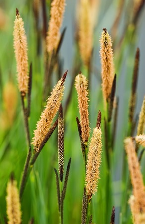 Close up of high grass - shallow depth of field Stock Photo