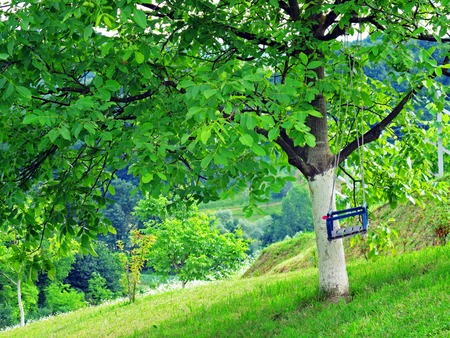 Tree with swing on green field