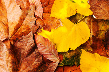 Autumn leaves garden background texture