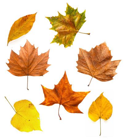 Autumn leaves isolated on white set