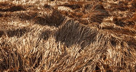 Fallen crops on the field in autumn Stock Photo - 55118185