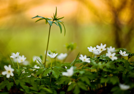 Small plants on a forest floor, shallow depth of field Stock Photo