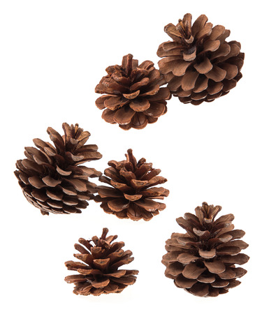 Set of coniferous tree cones isolated on white