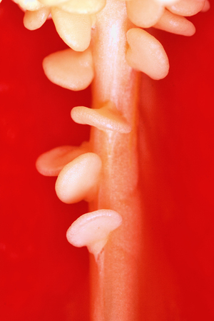Red pepper paprika, isolated, close-up, shallow depth of field Stock Photo - 120141955