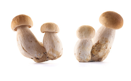 Edible mushroom isolated on white Stock Photo