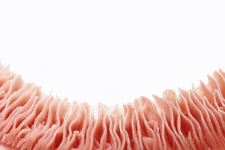 Mushroom macro detail studio shot Reklamní fotografie