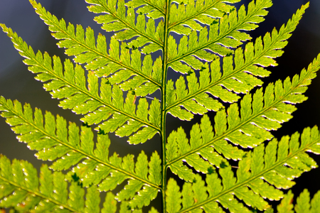 Fern leaf in the light of the morning sun in the darkness of the forest. Reklamní fotografie