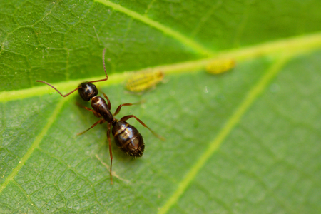 Ant Warrior Stock Photos And Images - 123RF