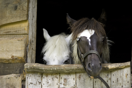Horse on a farm in stable Stock Photo - 121563013