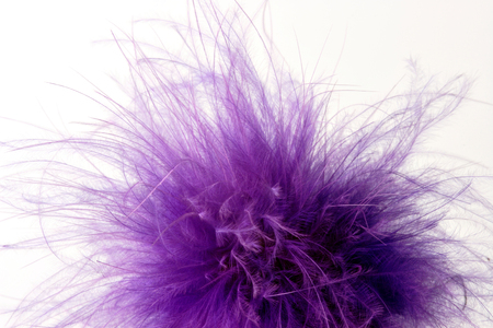 Fluffy violet feathers on white studio background