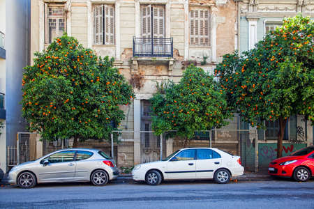 Lovely oranges growing in the Athens street