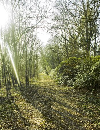 sunny forest Stock Photo