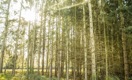 sunny day forest Stock Photo