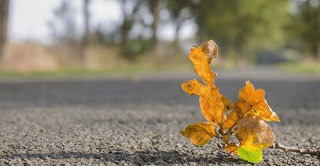 leaf drop down on road Stock Photo