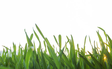 Green grass isolated Stock Photo