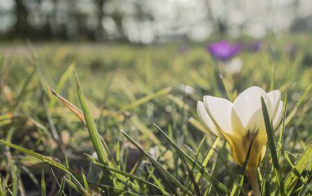 Spring flower in the grass