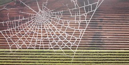 Frozen spider web Stock Photo