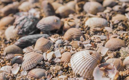 Close up of beach shells