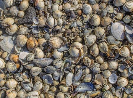 Close up of beach shells background Stock Photo