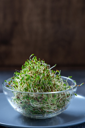 Young sprout microgreen, alfa alfa micro greens, vitamin and energy diet, vegan healthy food