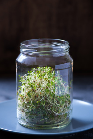 Micro greens sprouts in a glass, alfa alfa micro greens, vitamin and energy diet, vegan healthy raw food Stock Photo