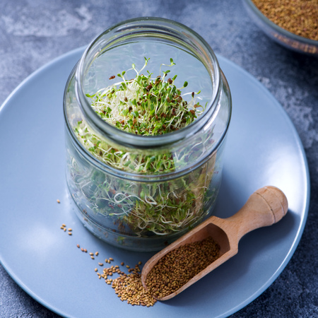 Micro greens sprouts in a glass, alfa alfa seeds, vitamin and energy diet, vegan raw healthy food