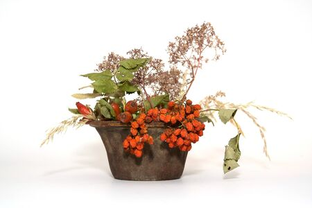 Autumn decorated isolated plant Stock Photo - 10908733