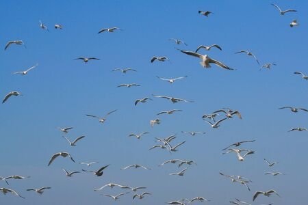Lots of flying gulls with a blue sky