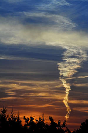 contrail: Sunset with contrail and silhouette of trees