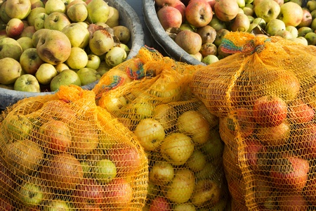 windfalls: Two buckets and three sacks with many apples