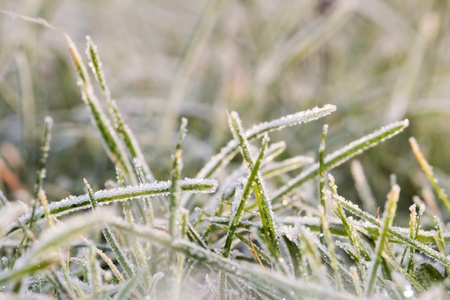 Closeup of blades of grass covered with rime Stock Photo