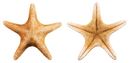 Front and back of a starfish over a white background photo