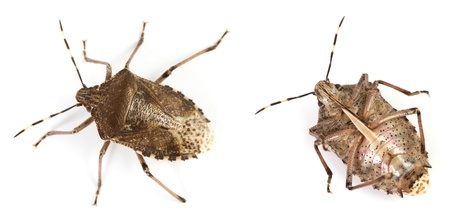 Closeup of a bug over a white background
