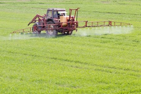 pesticides: A red old tractor fertilizes a green field in spring