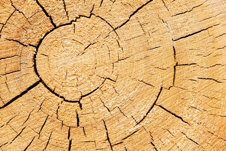 fissures: Closeup of a brown cut tree trunk with fissures