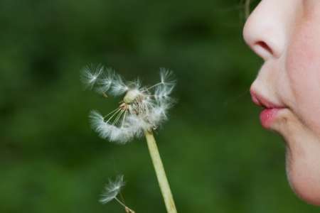 Closeup of a child with a dandelion in front of the face while blowing Stock Photo