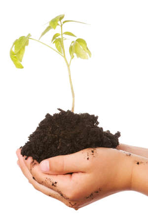 Hands of a child holding a little green plant over a white background photo