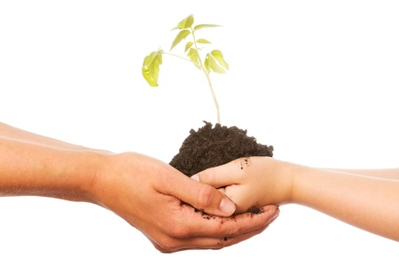 hand holding plant: Hands of a child and a woman holding a little green plant over a white background Stock Photo