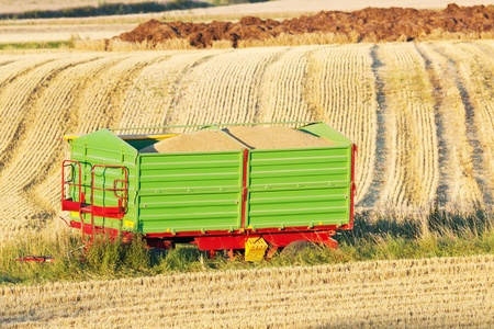Green trailer filled with corn during harvest on a field in sunlight photo