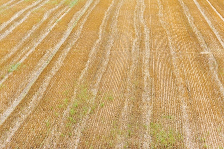 Tracks of a tractor on a field in sunlight after harvest photo
