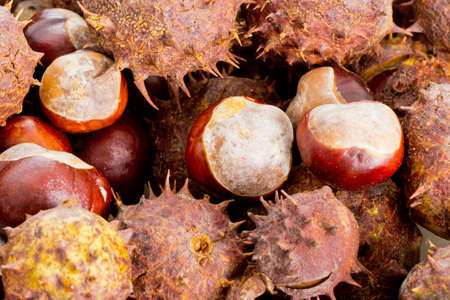 Closeup of many brown chestnuts with and without shells Stock Photo - 17011568