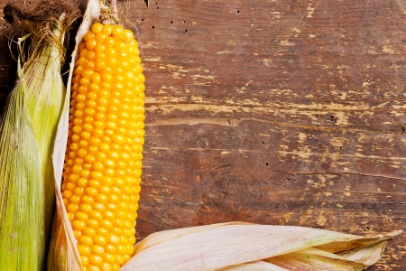 Two ripe corncobs on a wooden background with room for text