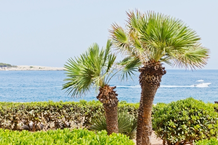 Two palms on the beach with a boat in the background