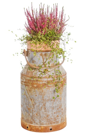 Old rusty milk can with heath over a white background