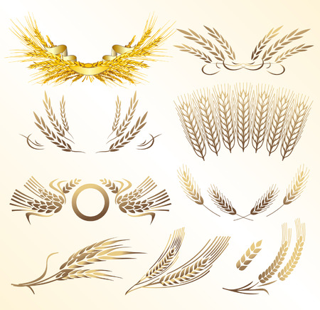 wheat vector Stock Vector - 3656925