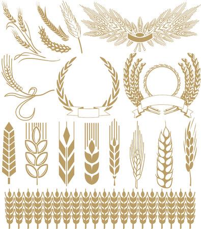 épis de blé Vecteurs