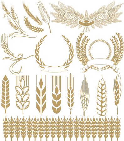 ears: wheat ears