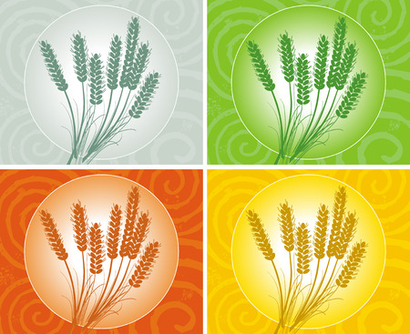 wheat ears in several colors Illustration