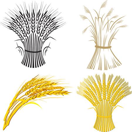 oat plant:  four wheat sheaf Illustration