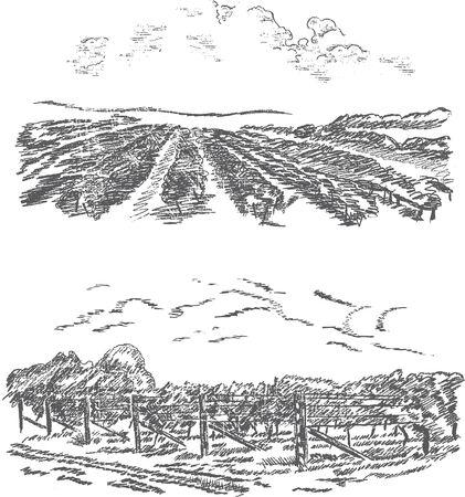Vintage - vigneto e il castello (struttura di etichetta)
